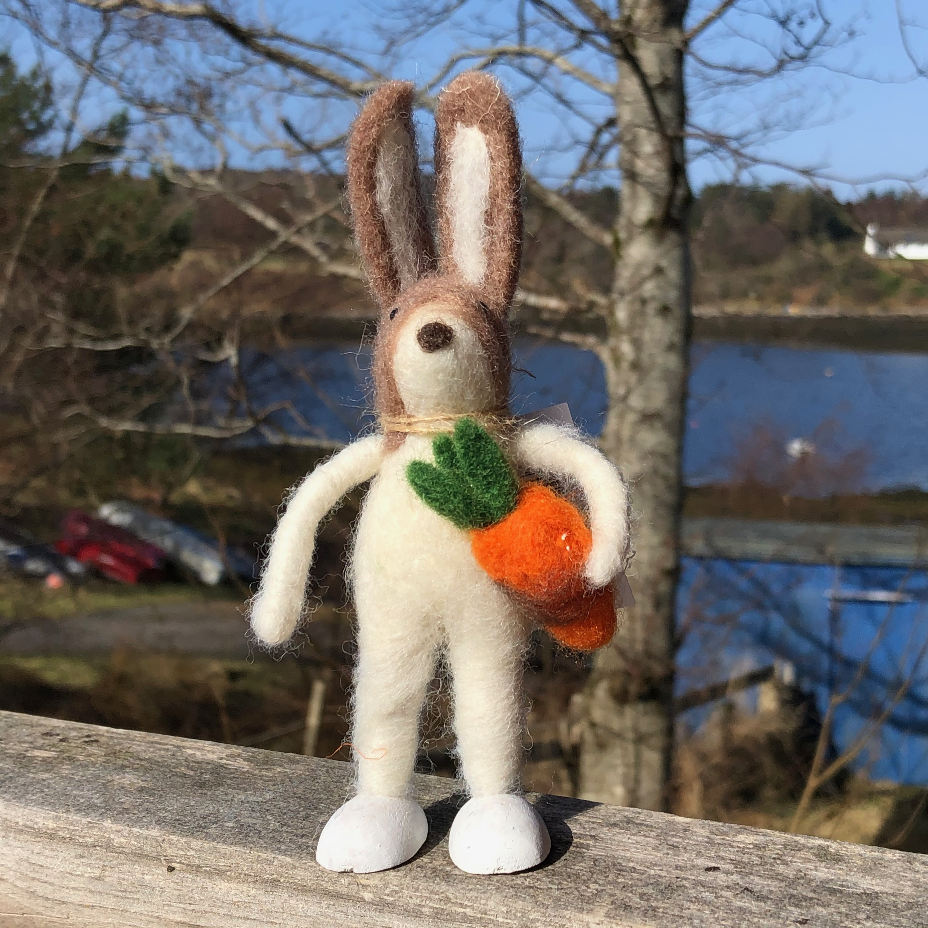 Kevin & the Carrot Bunny