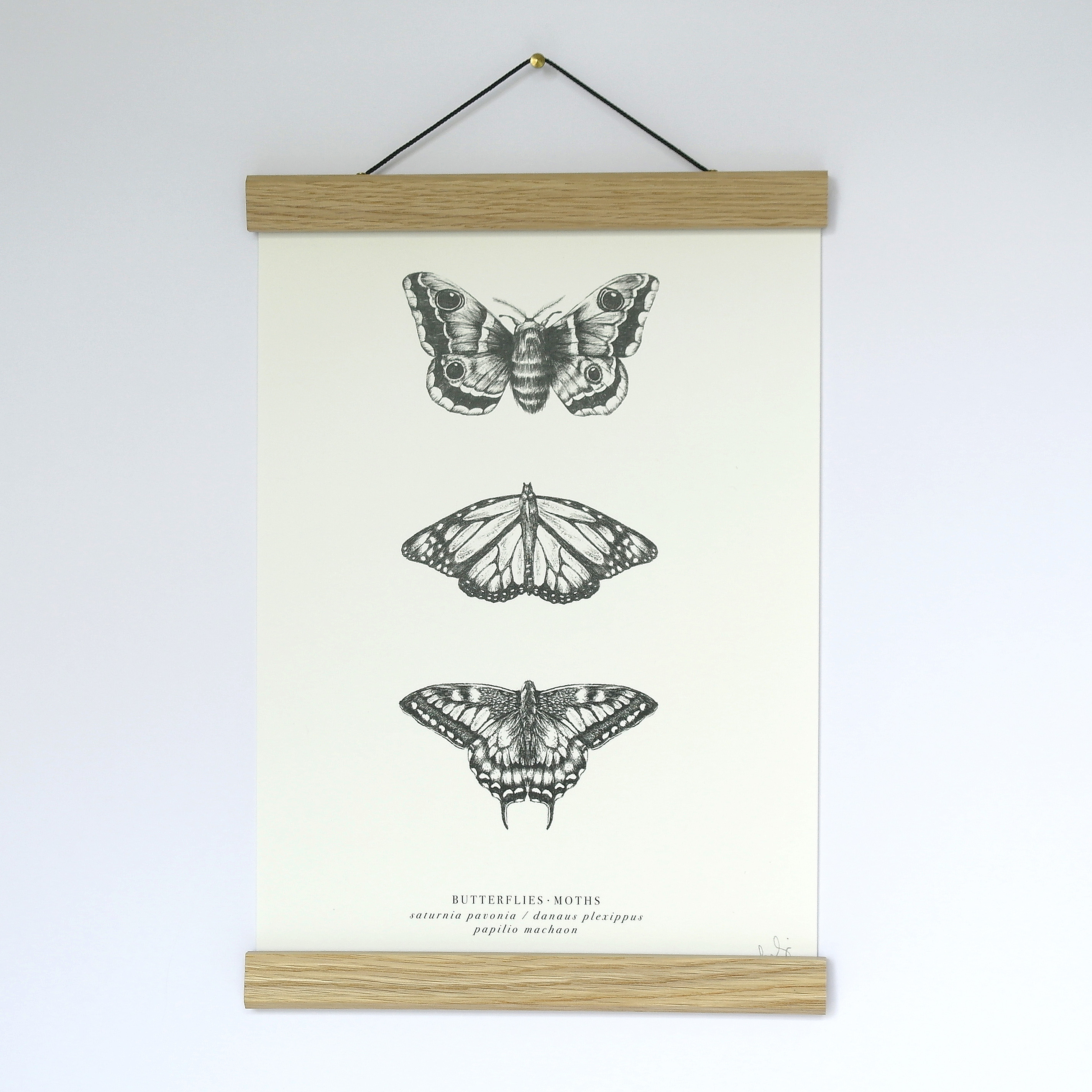 A4 Butterfly/Moth Print