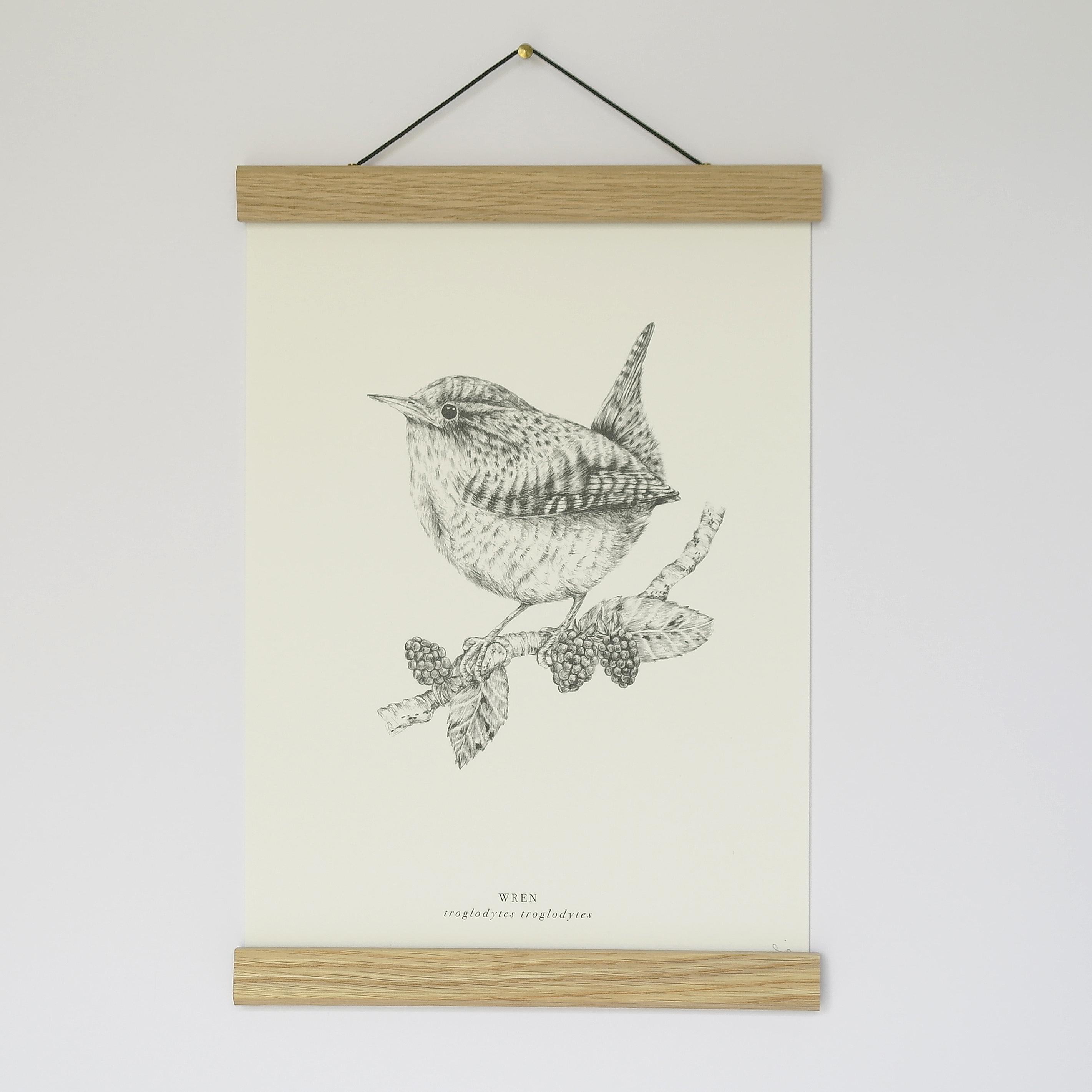 A4 Wren Print Unframed