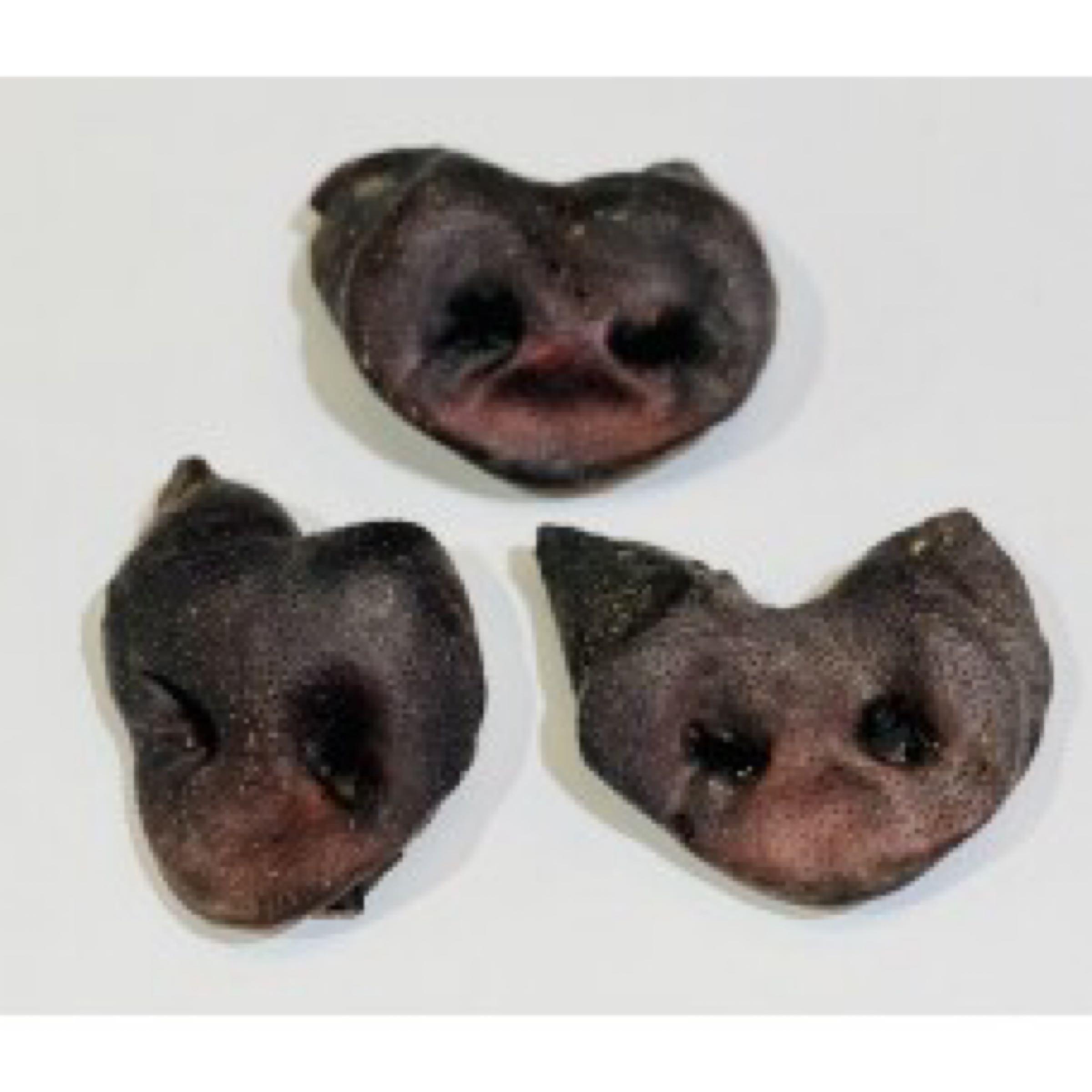 Wild Boar Snouts