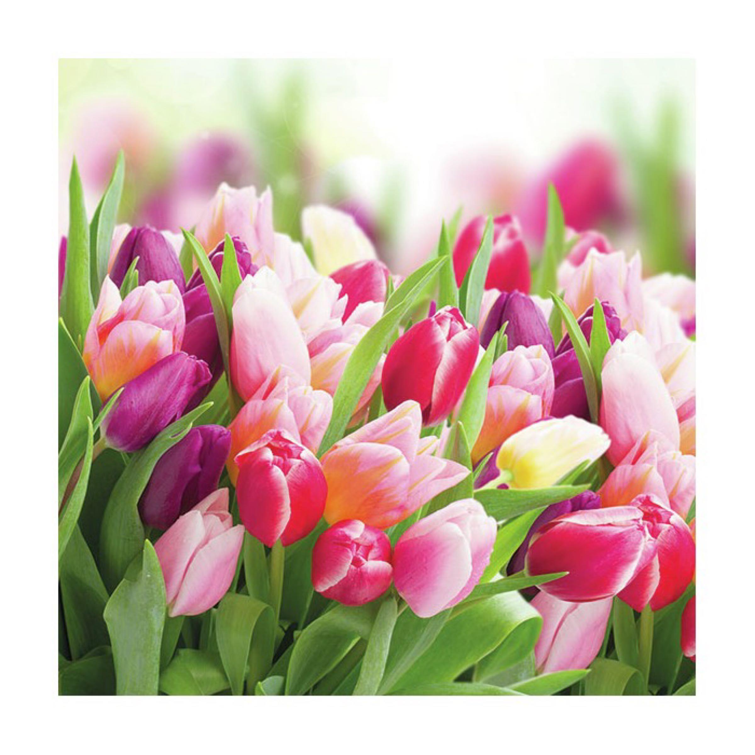 Ambiente Napkins / Servietter - Glorious Tulips
