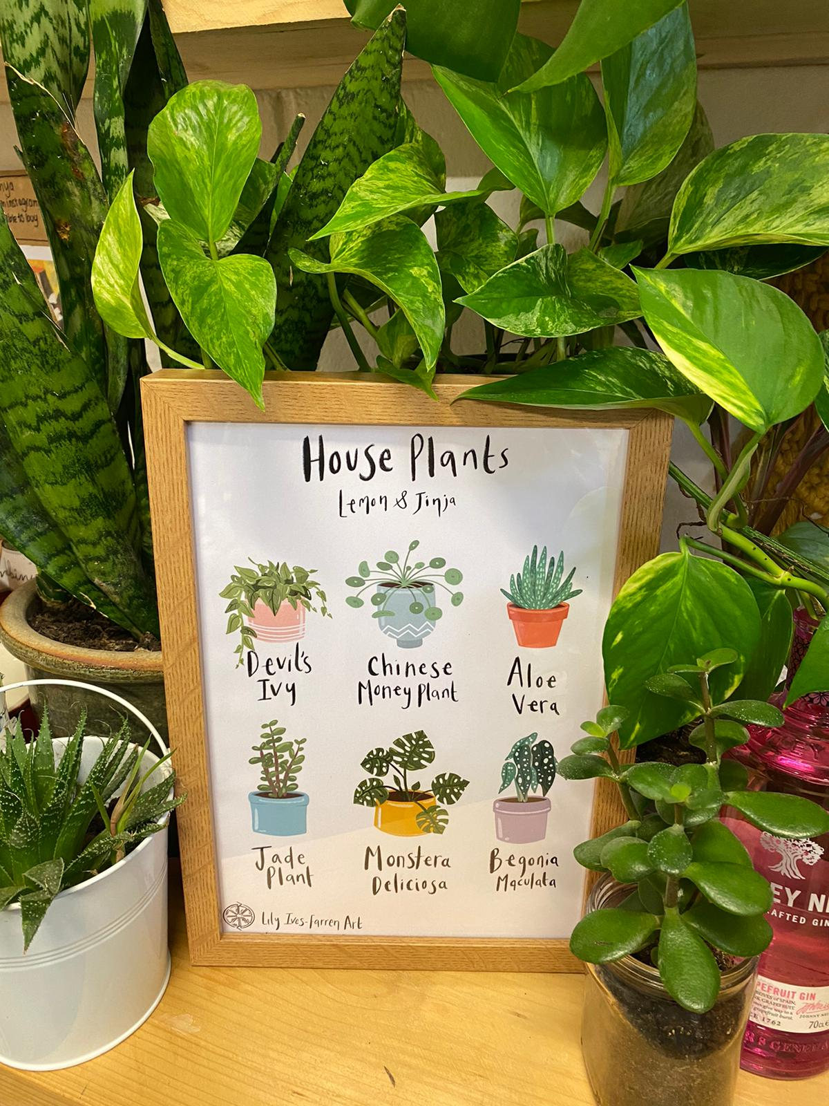 House Plants Poster | Lily Ives-Farren Art