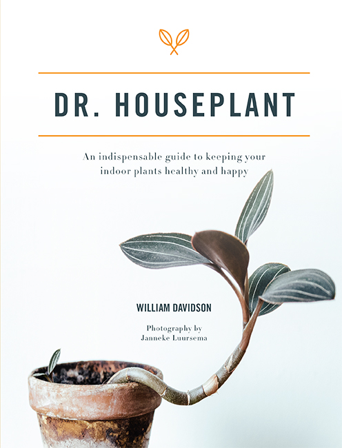 Dr. Houseplant | William Davidson