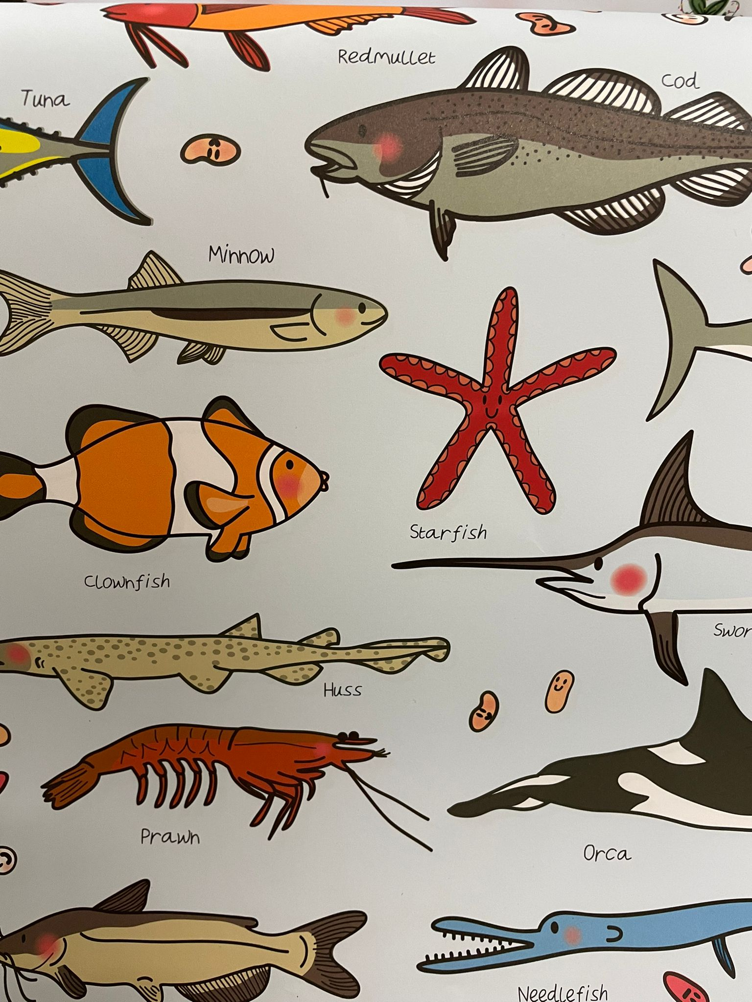 Cavallini Fish, Wrapping Paper   Re-wrapped