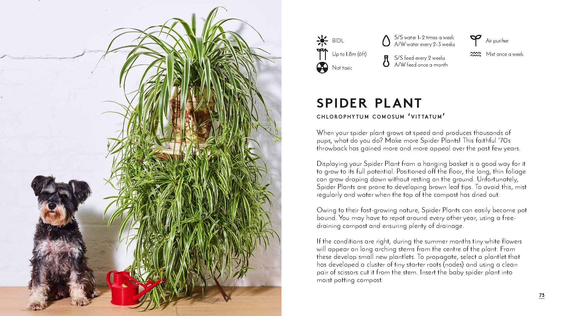 Little Book: Big Plants