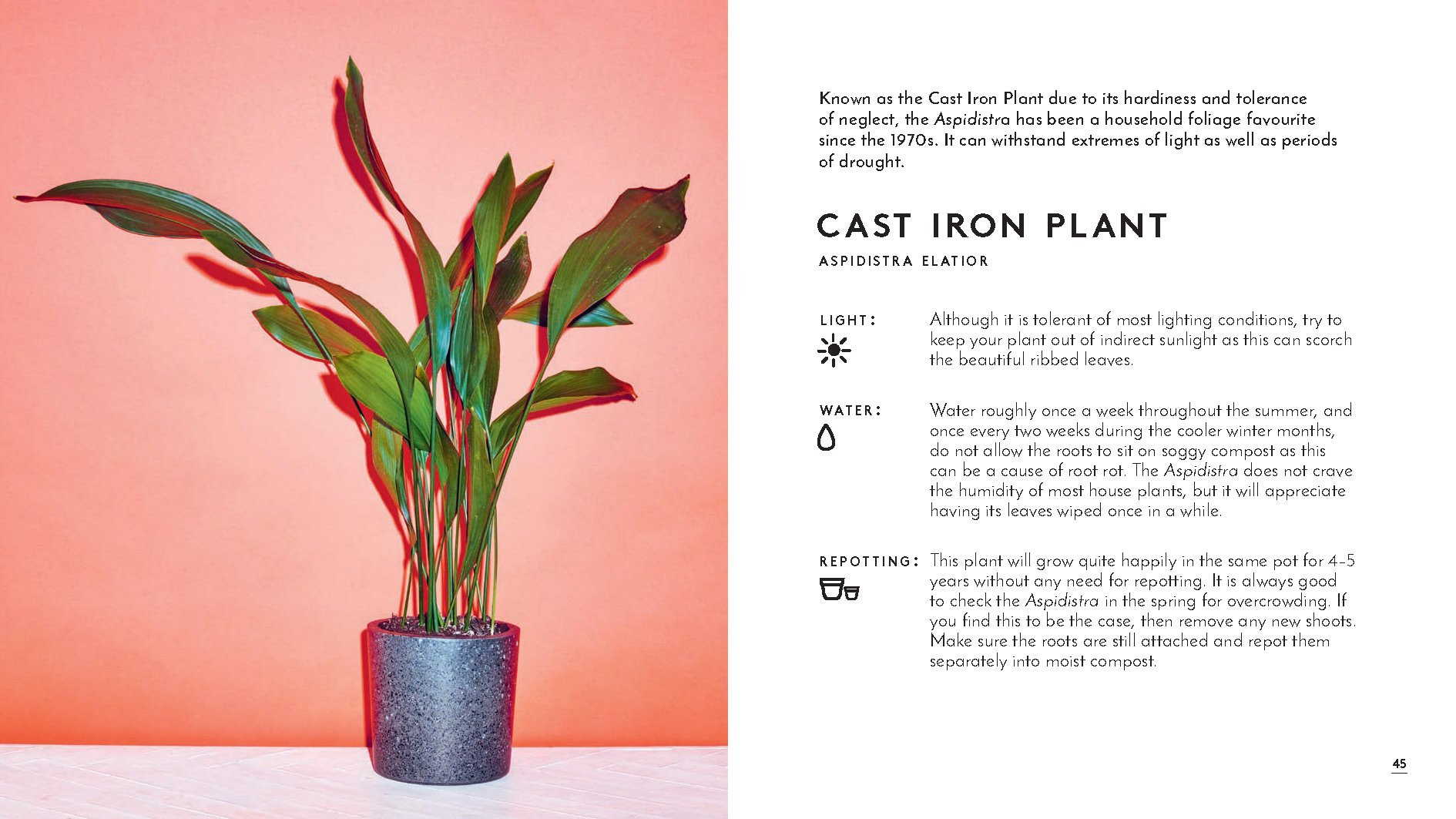 The Little Book of House Plants and Other Greenery