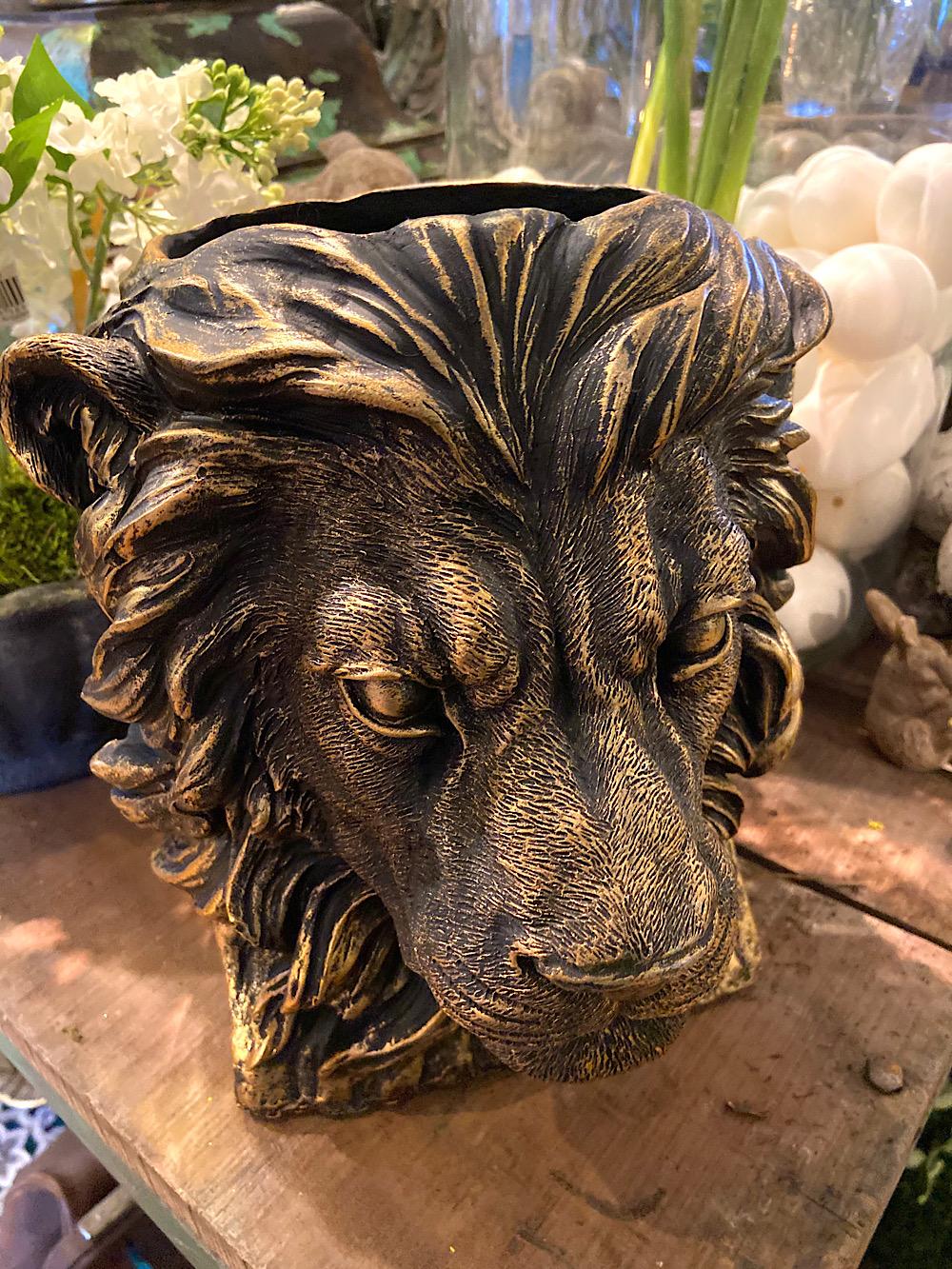 Leijonaruukku