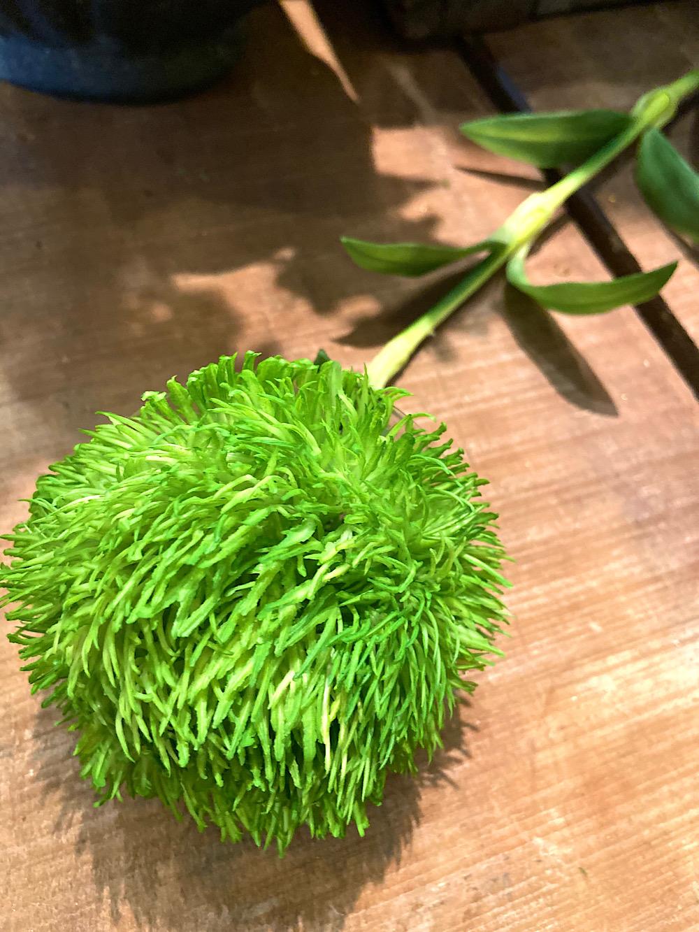 Mr Plant Neilikka vihreä