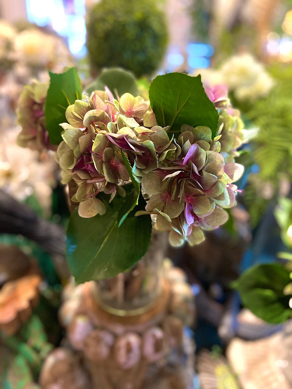 Mr Plant Hortensiankukia vaal.pun/vihreä