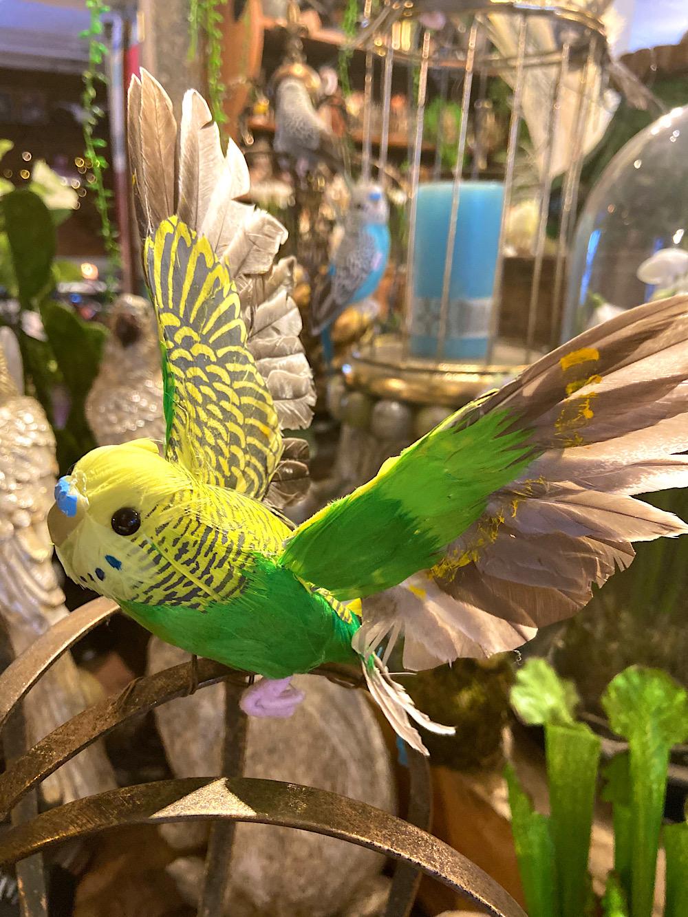 Undulaatti Lentävä keltavihreä