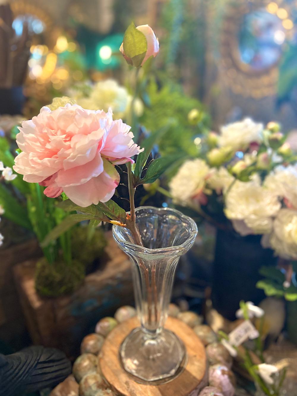 Mr Plant Pioni vaaleanpunainen