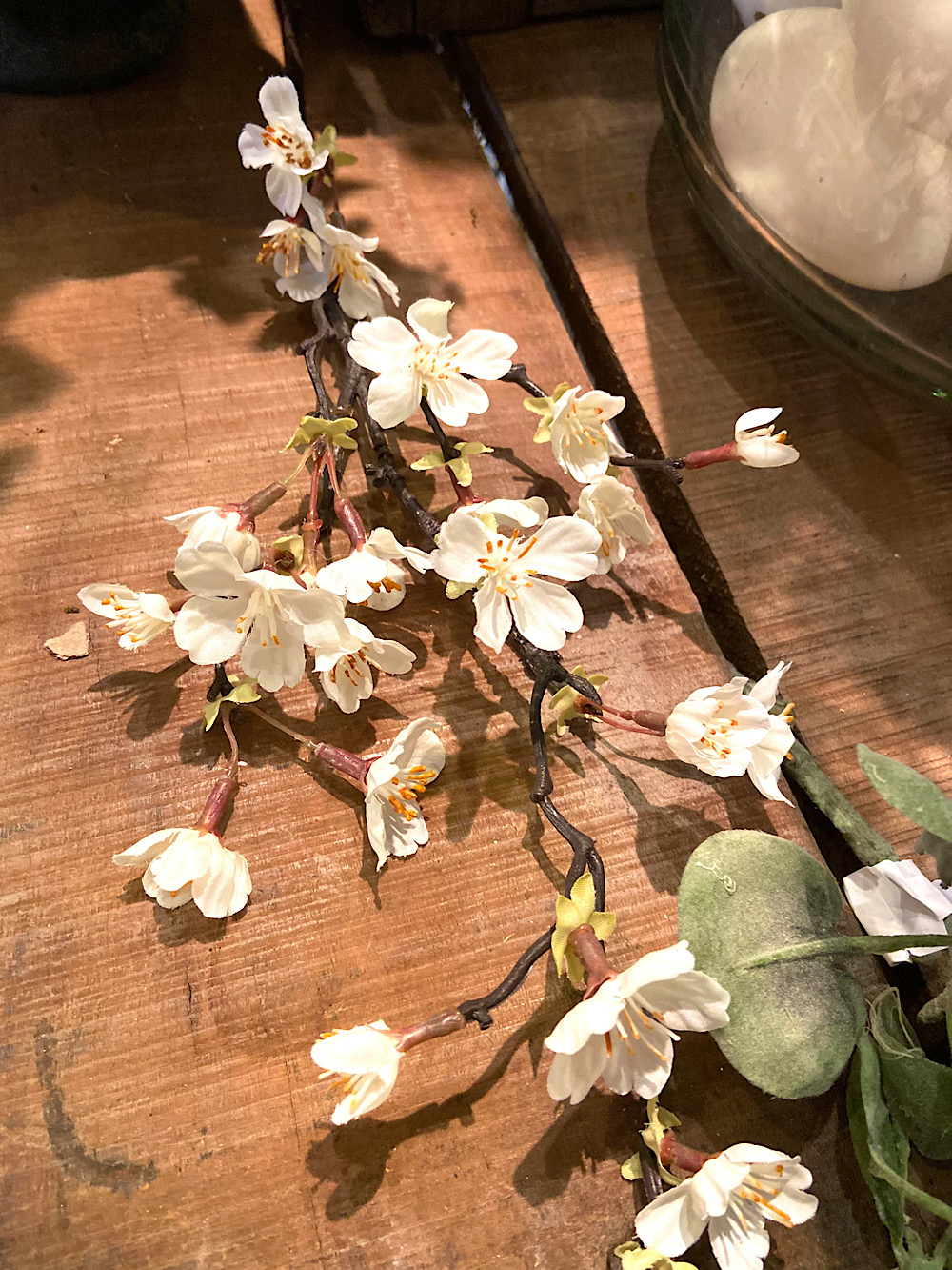 Mr Plant koristeoksa Kirsikankukka