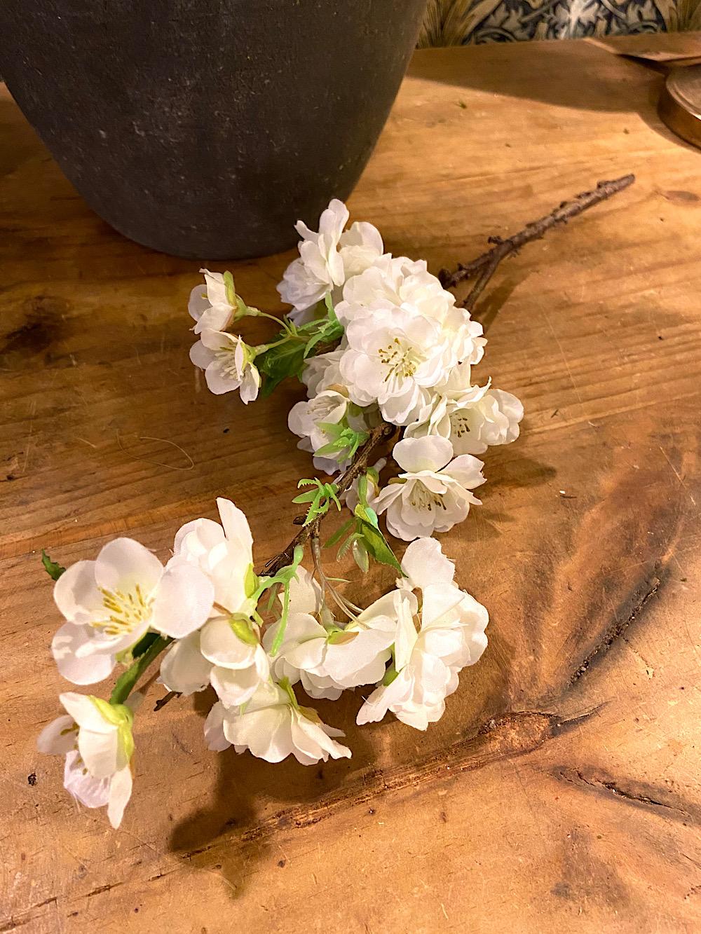 Mr Plant Kirsikanpuun oksa