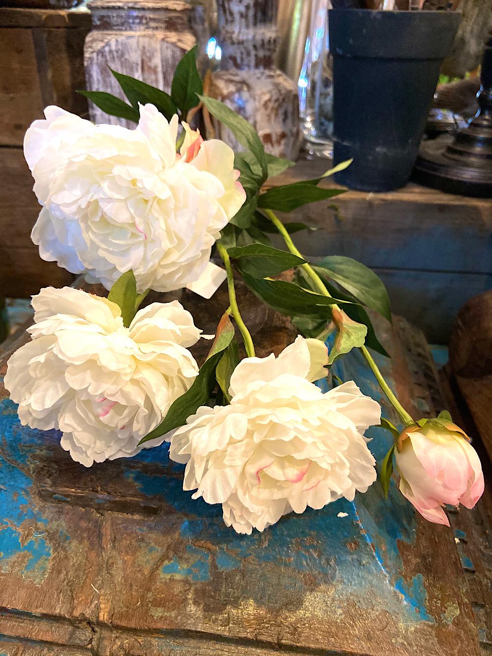 Mr Plant Pioninoksa 3 kukkainen