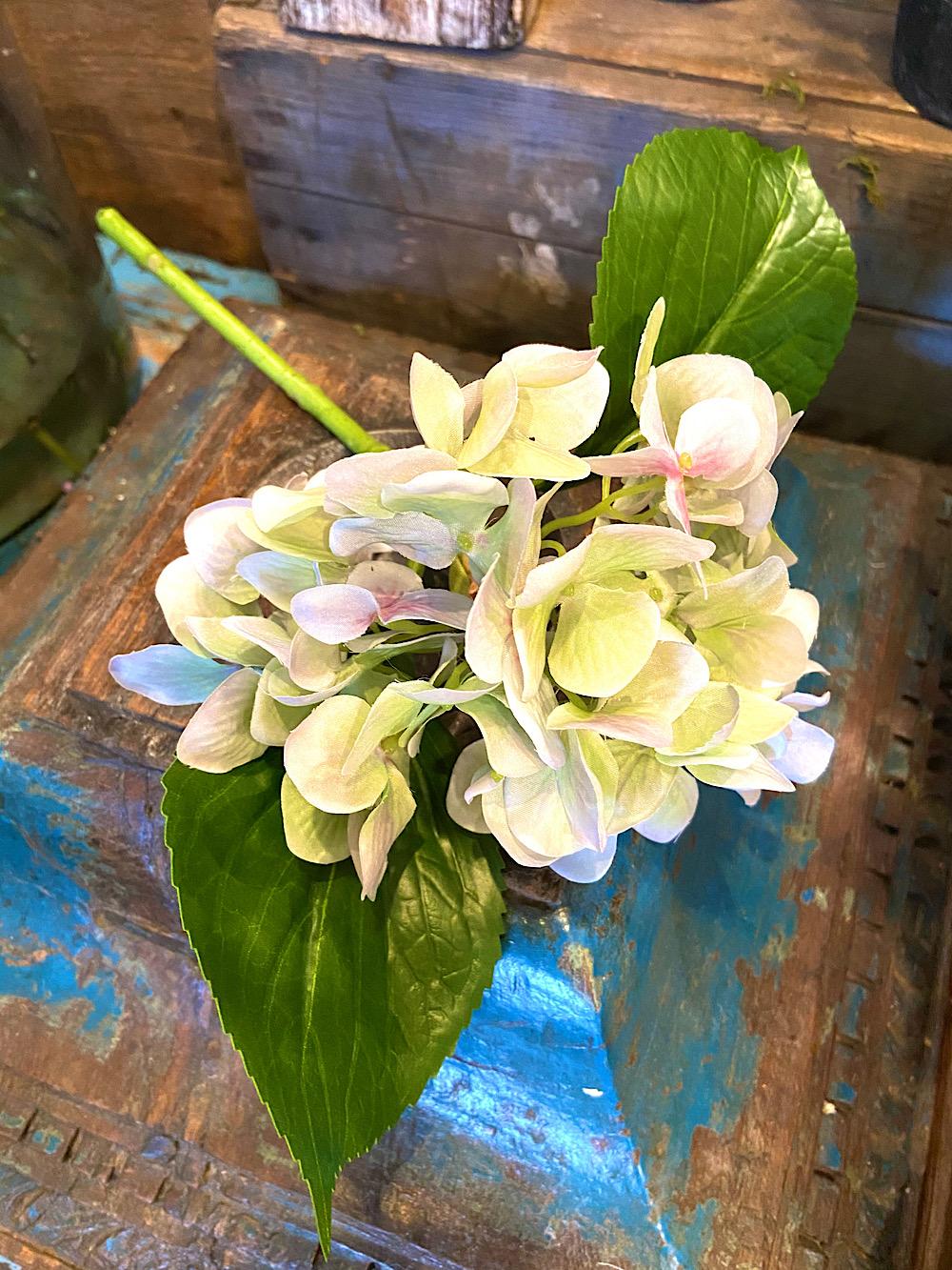 Mr Plant Hortensiankukka vihertävä