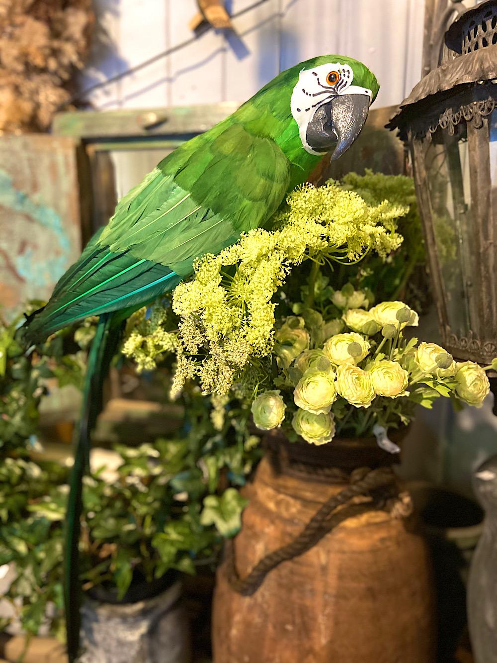 Vihreä Papukaija