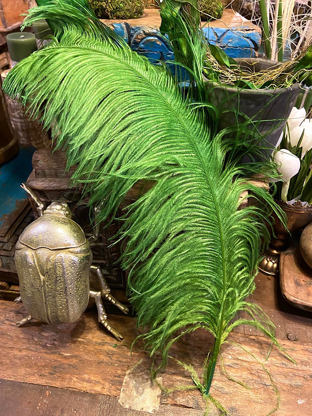 Strutsinsulka kirkkaan vihreä