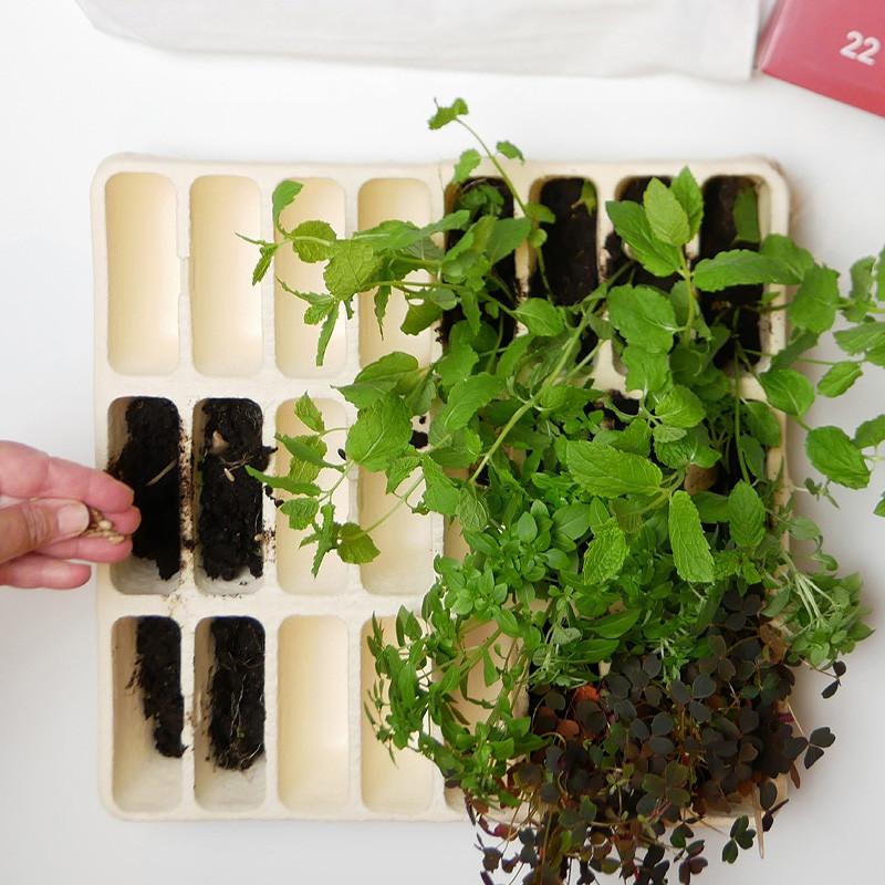 24 Days Of Tea Organic, Teministeriet