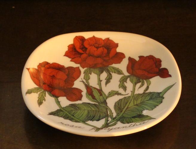 Arabia, tertturuusu, rosa polyantha, Esteri Tomula