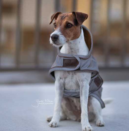 Dog Coat Reflective Water Repellant Kentucky Dogwear