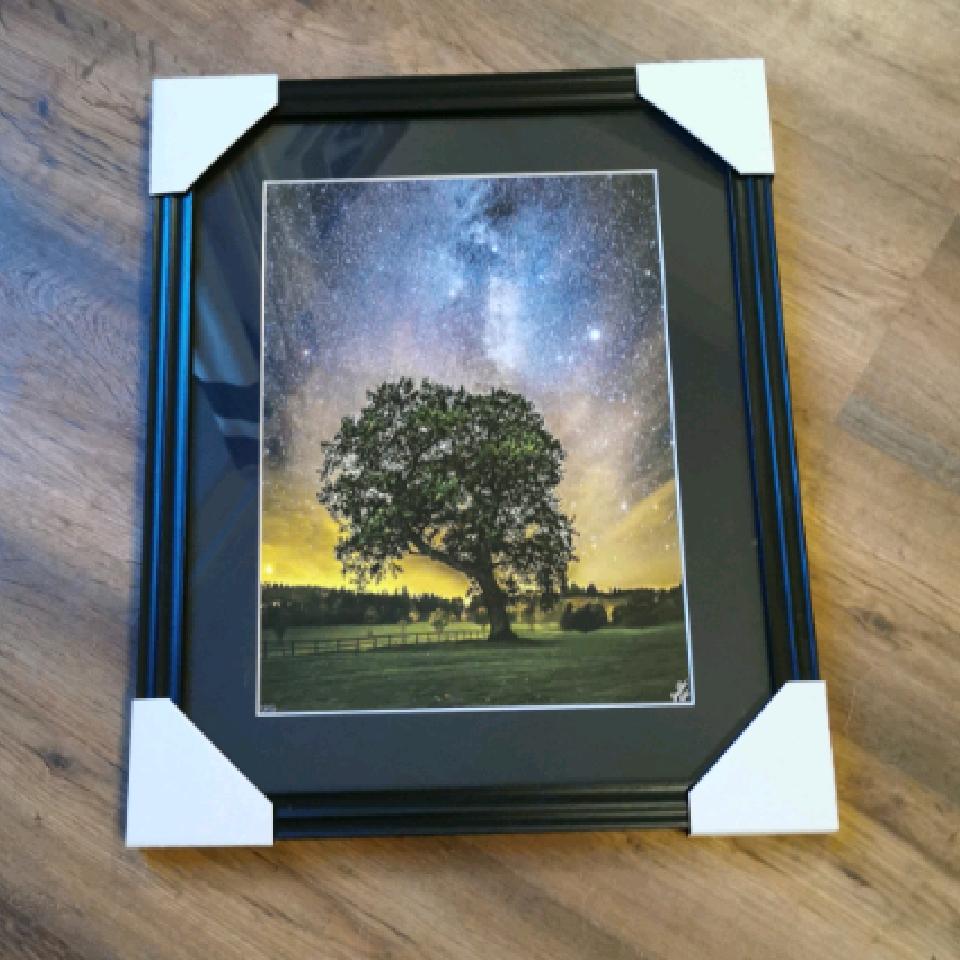 Old Tree at Castle Fraser, A3, 6/25, black