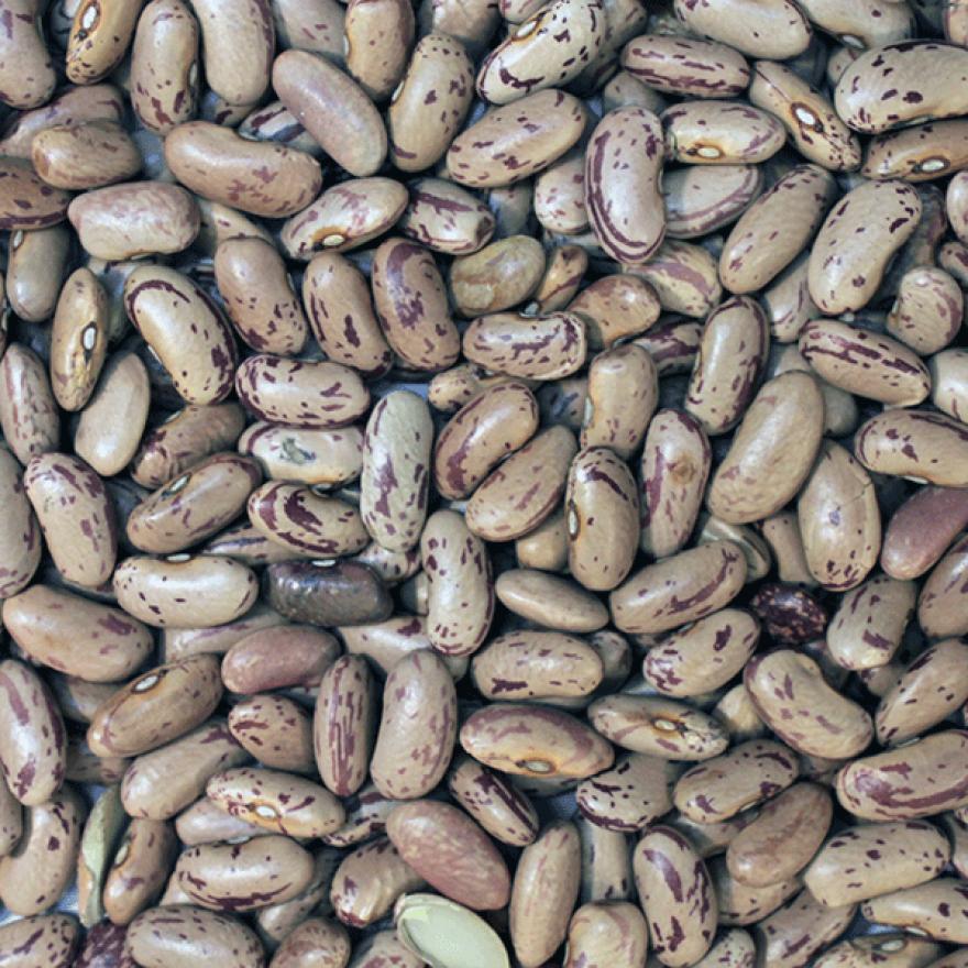 Organic Borlotti Speckled Kidney Beans