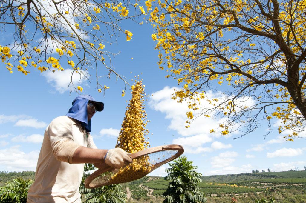 Brazil - Chapada de Minas - Fazenda Primavera
