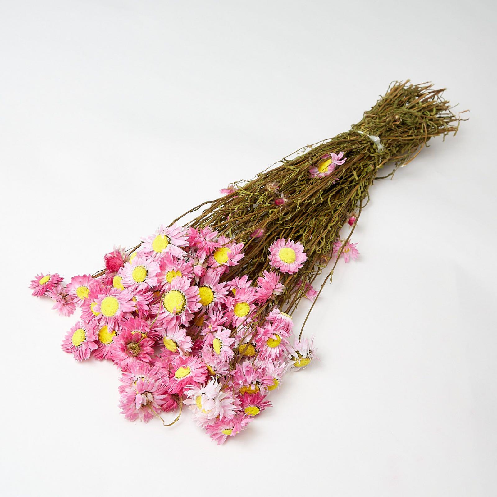 Pink acrolinium
