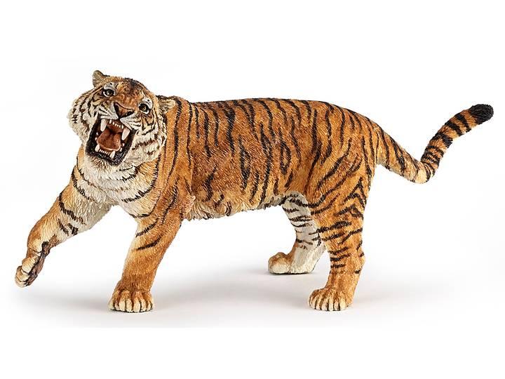 Tiger rytande