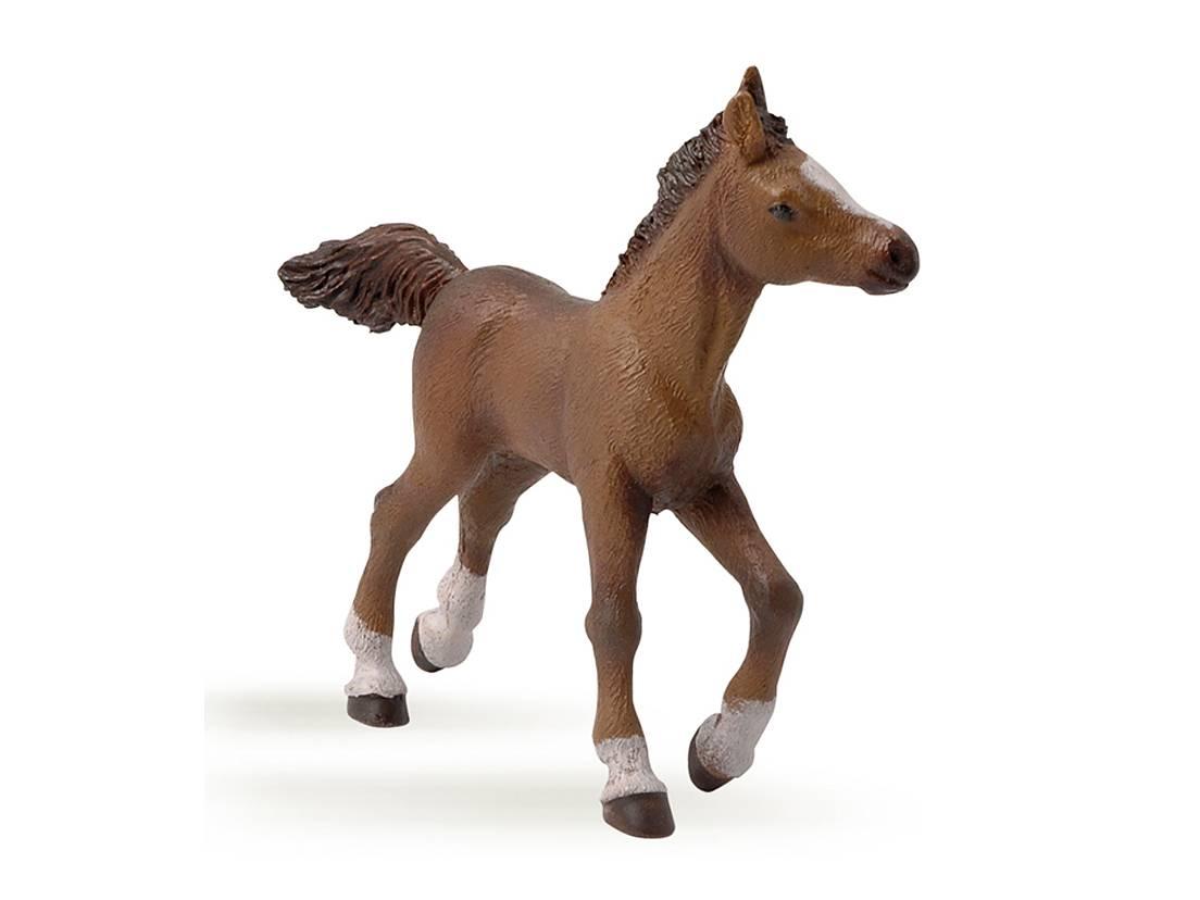 Häst Angloarab Föl Brun