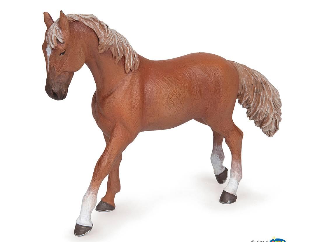 Häst Sto Fux