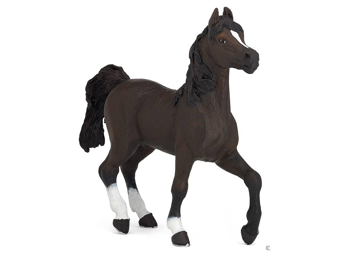 Häst Arab Brun