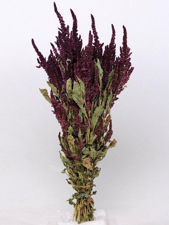 Tørrede blomster, Amaranthus mørkerød