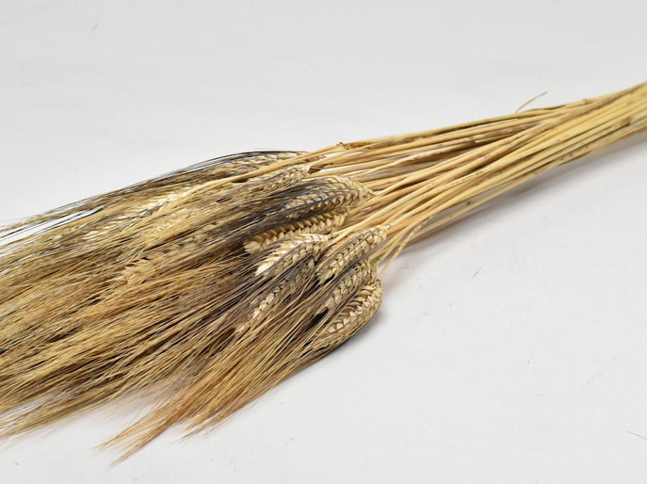 Tørrede blomster, Black Beard korn naturfarvet