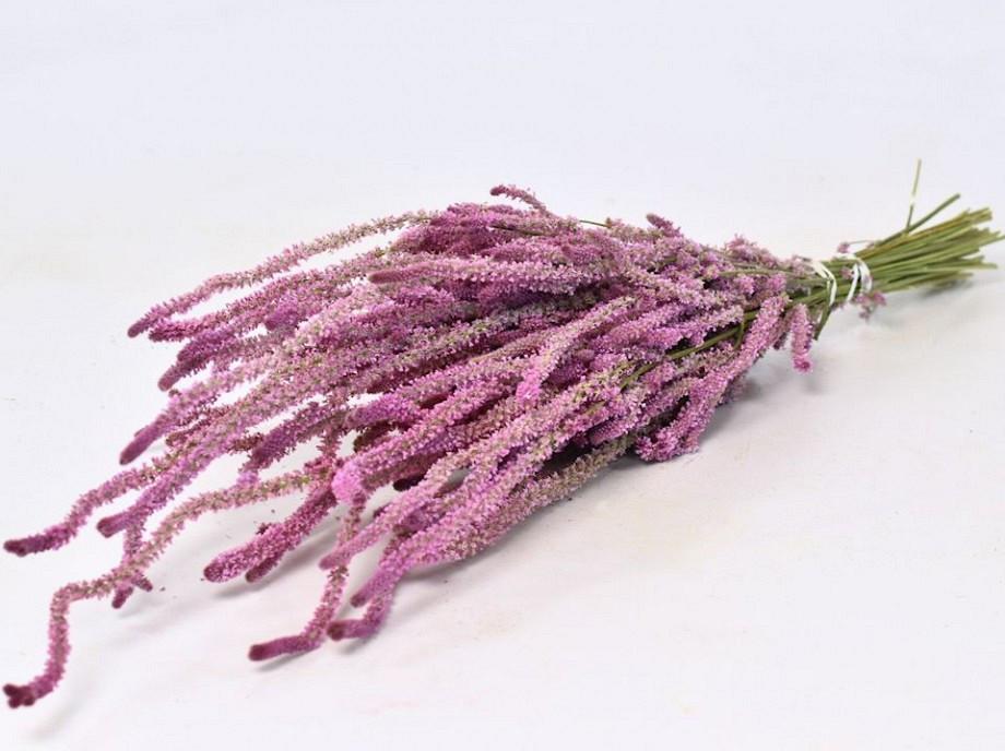 Tørrede blomster, Statice Suworowii