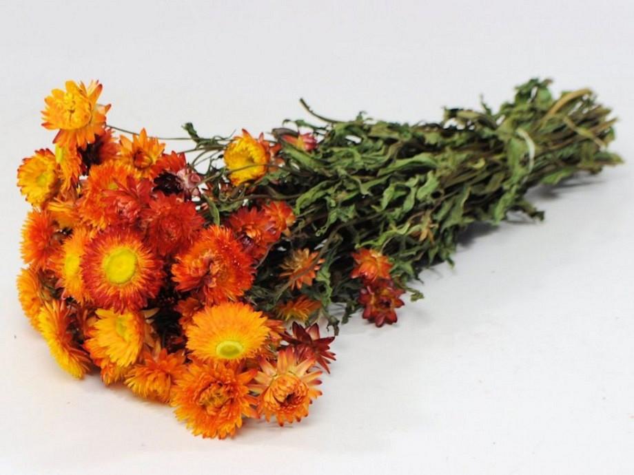 Tørrede blomster, Helichrysum orange