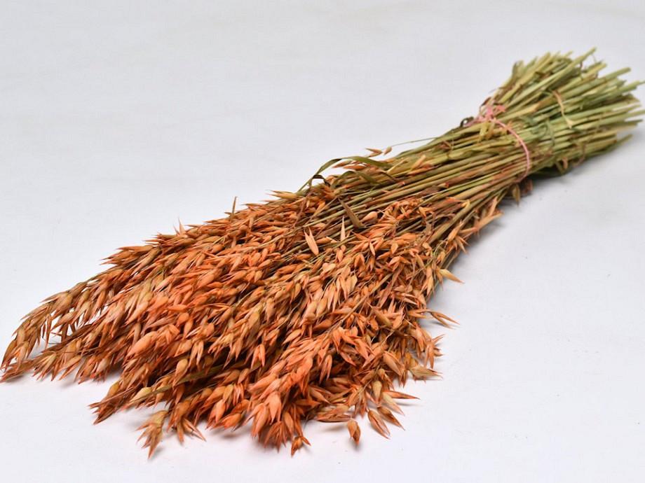 Tørrede blomster, Avena aks korn orange