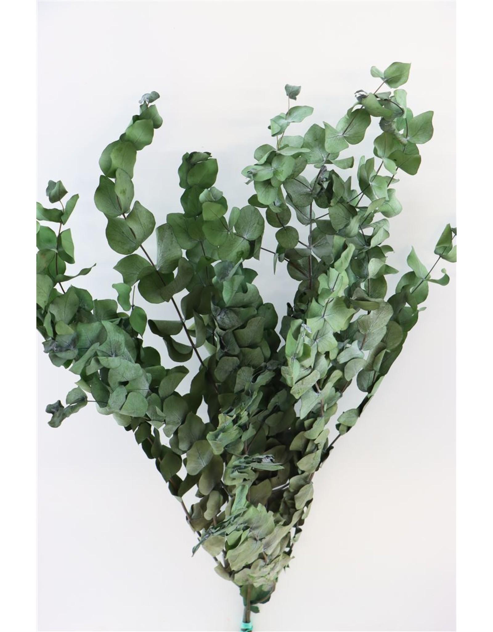 Tørrede blomster, Eucalyptus Espiral grøn