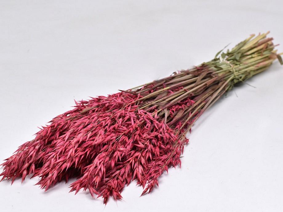 Tørrede blomster, Avena aks korn pink