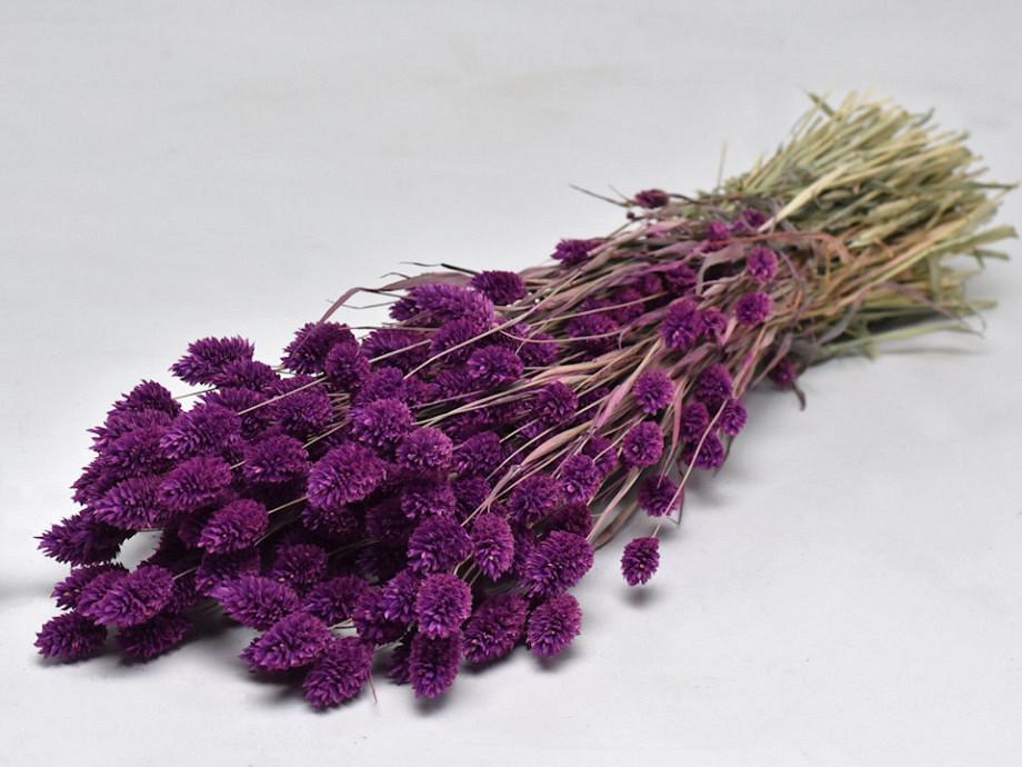 Tørrede blomster, Phalaris lilla