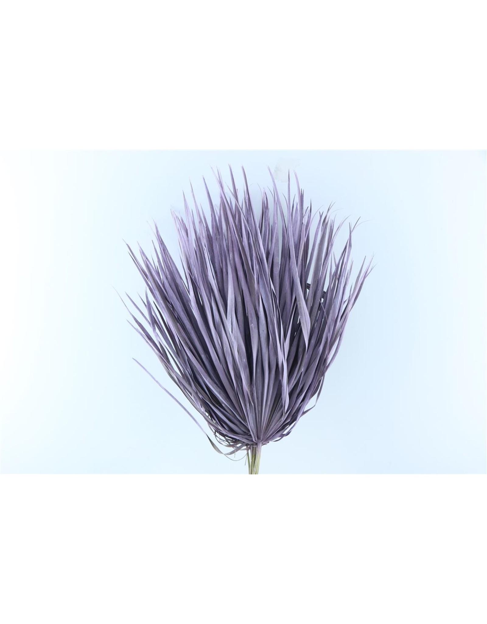 Tørrede blomster, palme lilla