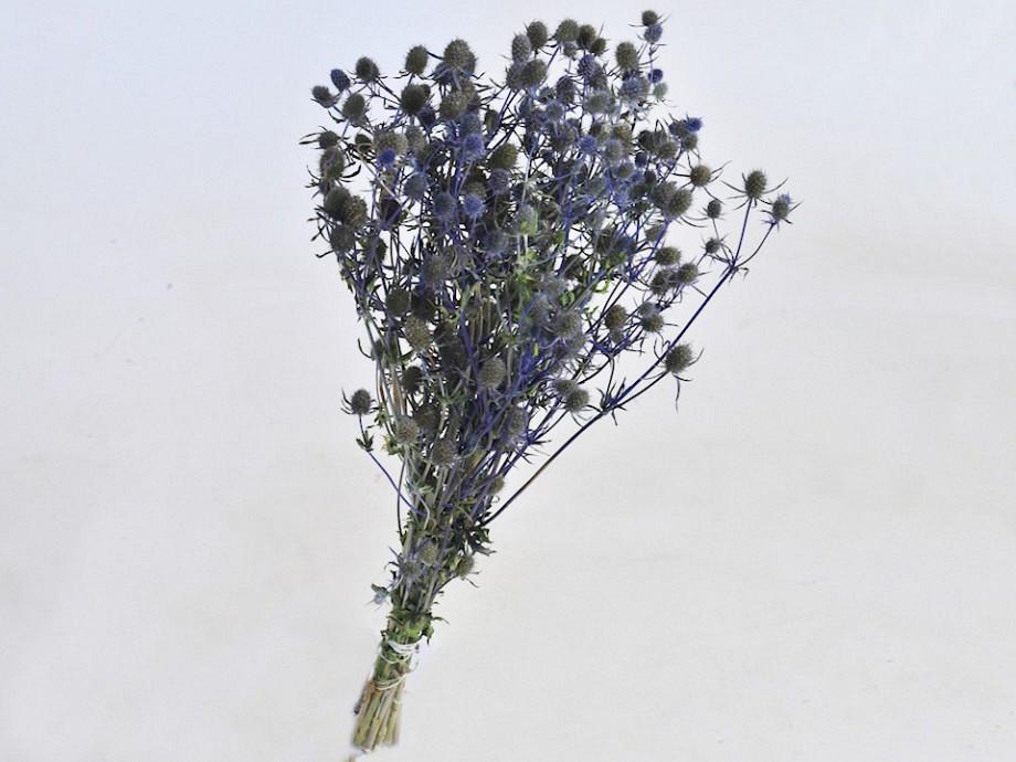 Tørrede blomster, Eryngoum tidsel
