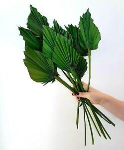 Tørrede blomster, palme grøn