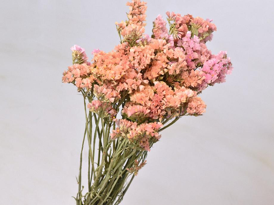 Tørrede blomster, Linonium Statice
