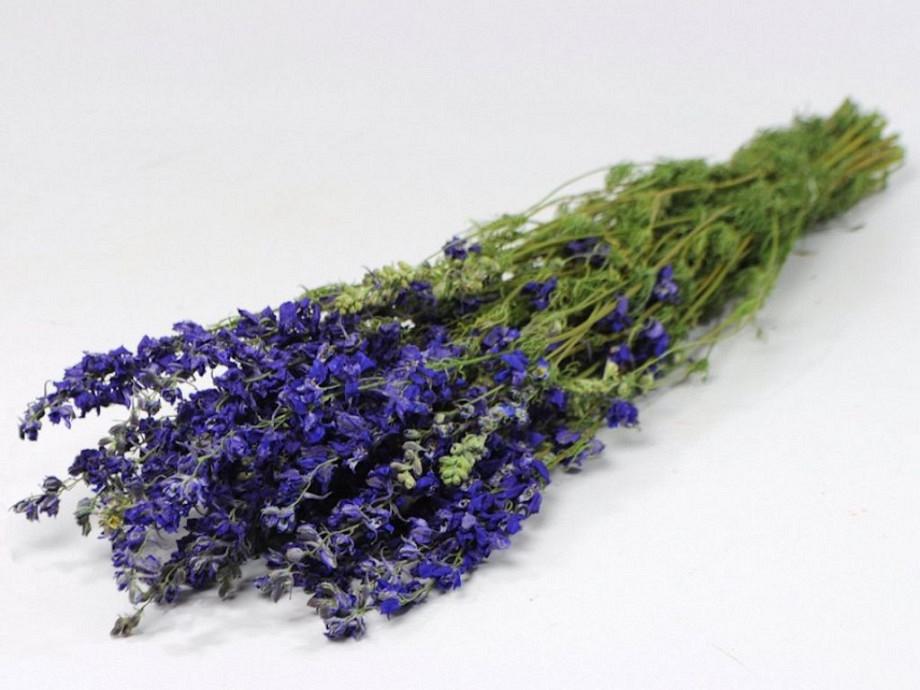 Tørrede blomster, Delphinium blå