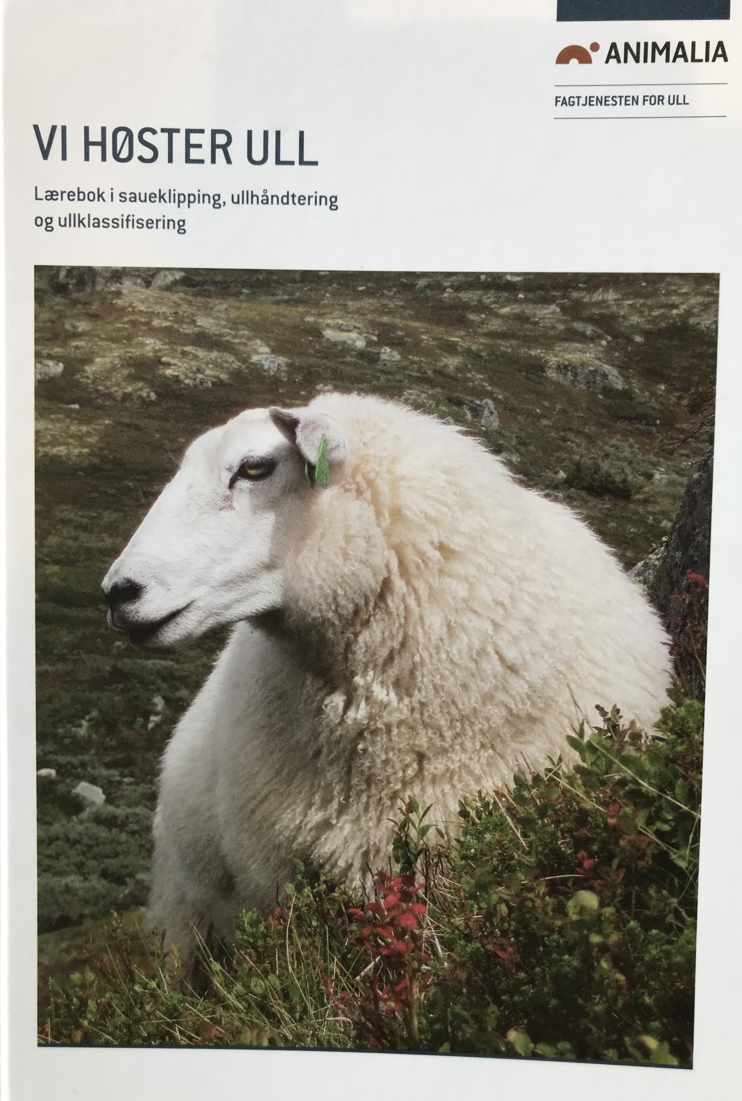 Vi høster ull