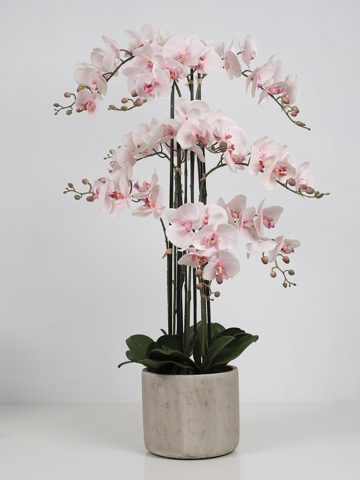 Orkide 9-grenet, lyserød,  i grå keramikpotte H105 cm