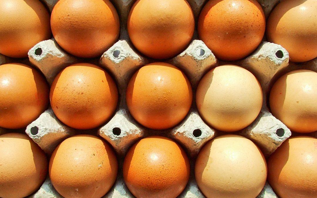 Black Dog Free Range Eggs