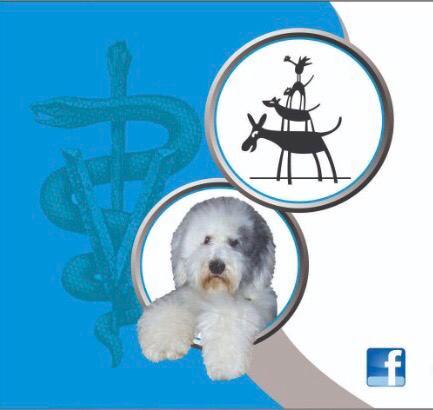 Veterinaria Reino Animal