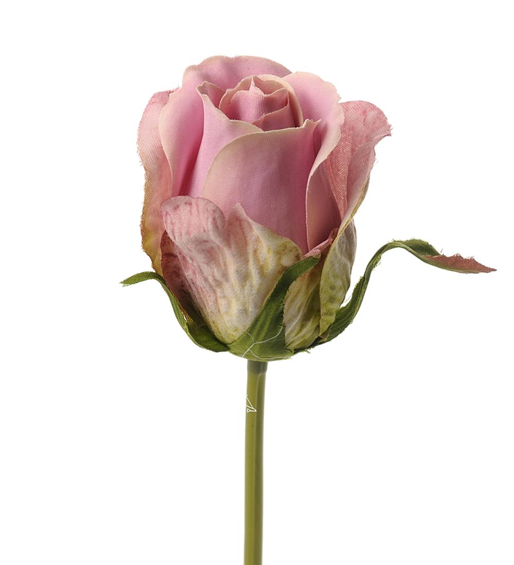 Rosa Rose 25 cm